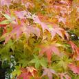 晩秋の京都の紅葉